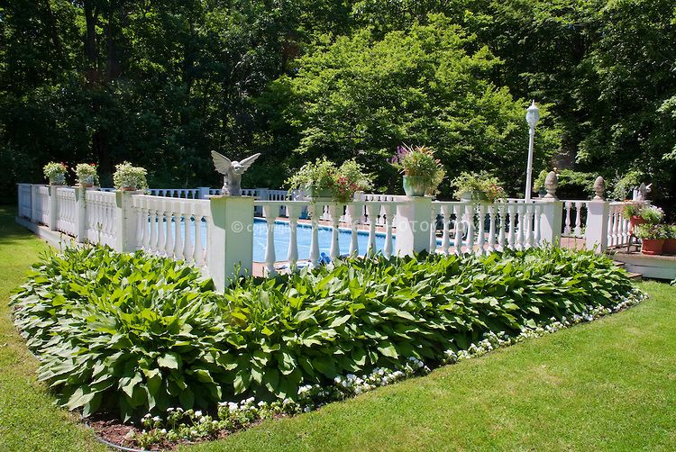 Hosta garden plantings next to swimming pool landscaping - Pool fence landscaping ideas ...