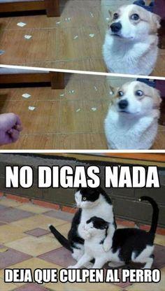 Memes En Espanol Graciosos Cuando Los Gatos Te Traicionan I Http Www Diverint Com Memes Espanol Grac Meme Gato Memes De Perros Chistosos Memes Perros