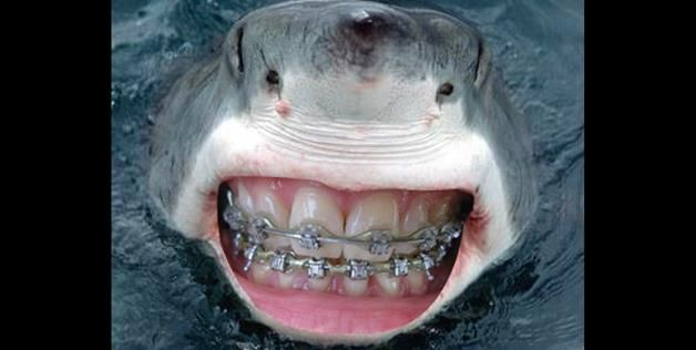 SMILE! | Photoshop | Human teeth, Photoshopped animals
