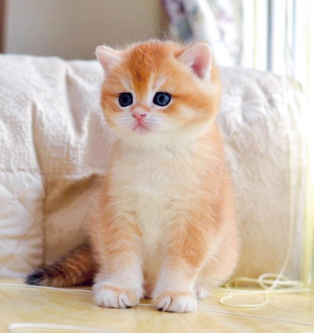 Cute Animals Jumpsuit Kittens Cutest Cats Cute Animals