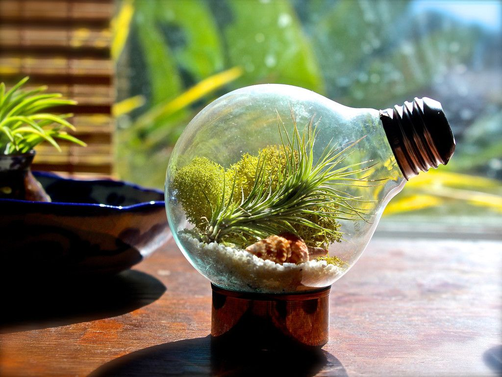 air plant terrarium made from an up cycled light bulb how cool - Kopfteil Plant Knig