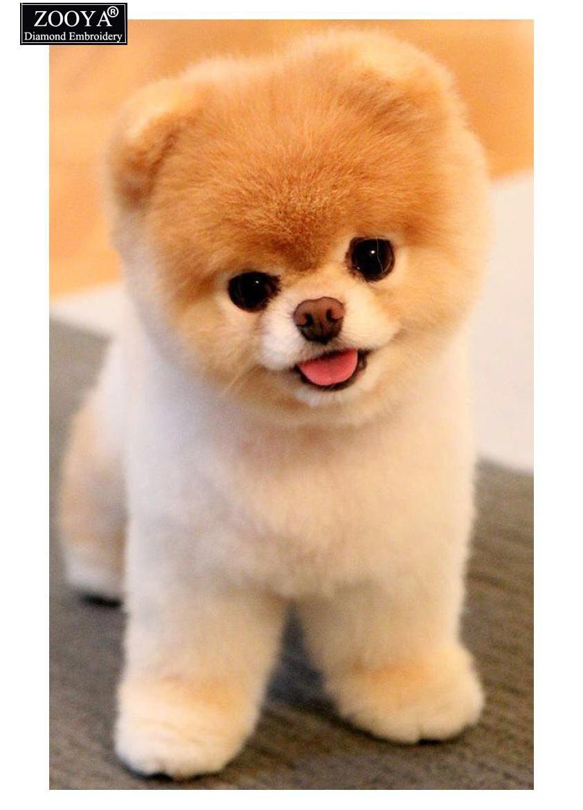 ZOOYA Diamond Painting Cross Stitch Animals Pomeranian Dog