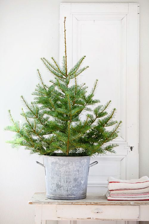 Tree In Pot Pretty And Simple Small Christmas Trees Small Christmas Trees Decorated Simple Christmas