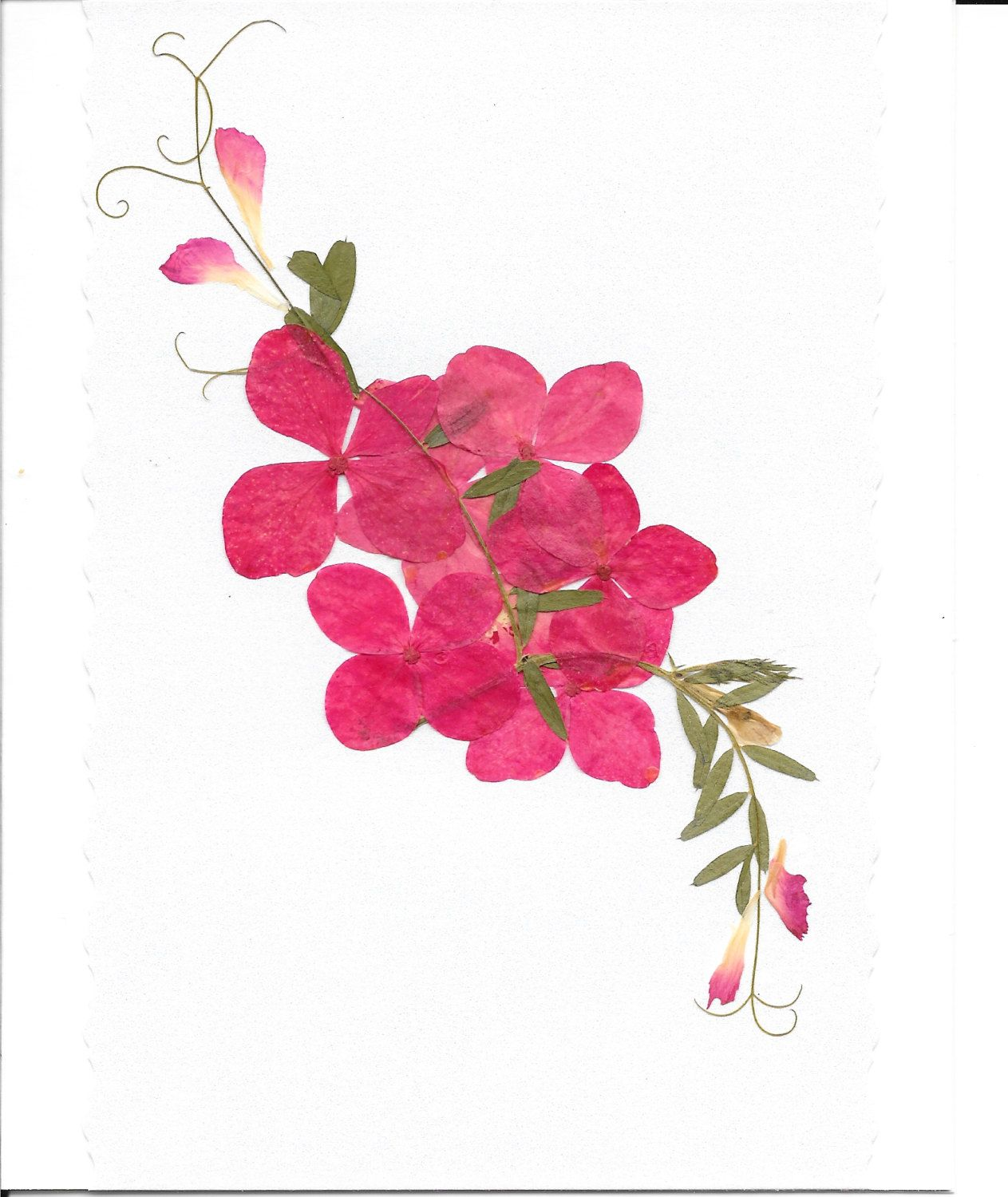 Pressed flowers greeting card real flower card birthday card pressed flowers greeting card real flower card birthday card floral card blank izmirmasajfo