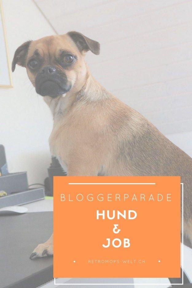 So Gestalten Wir Unseren Hundealltag Mit Job Das Sind Unsere Tipps Franzosische Hunde Hundegeschichten Hunde Erziehen