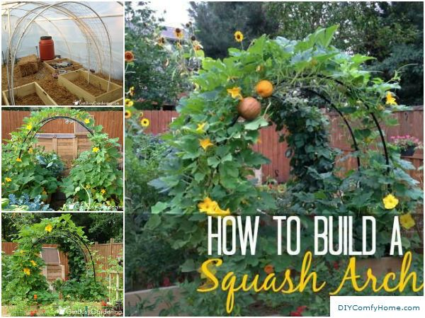 How To Build a Squash Arch or Trellis httpwwwdiyamazingideas