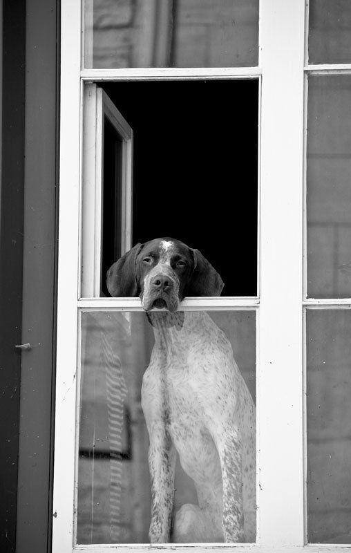 """""""How Much Is That Doggie In The Window"""" by Melissa Anderson. S) Looks like Tea!"""