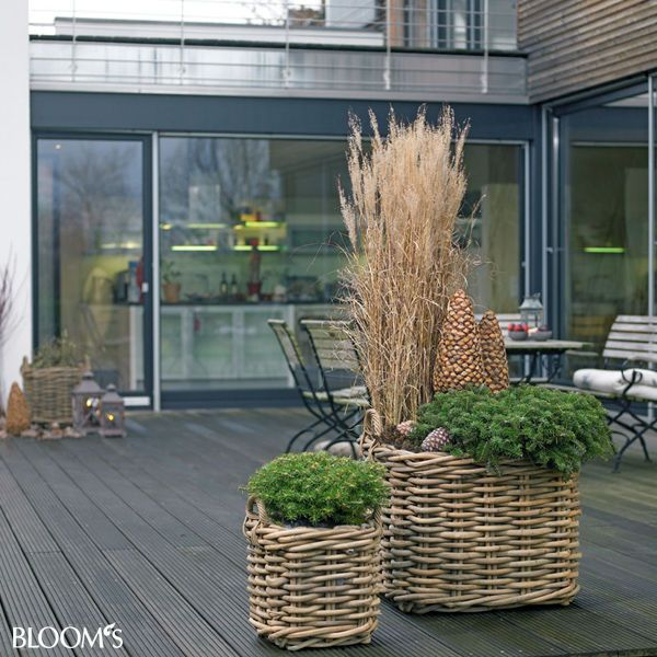 bepflanzungen f r balkon und terrasse im winter garten deko garten garten deko und balkon. Black Bedroom Furniture Sets. Home Design Ideas