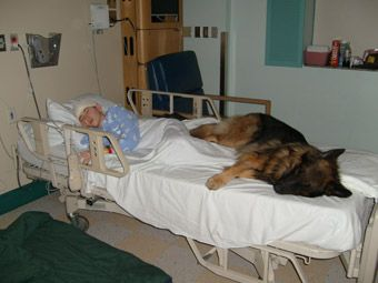 Close bond between a13 year old epilepsy patient and his service animal during a recent visit to the hospital. (click for story regarding photo)