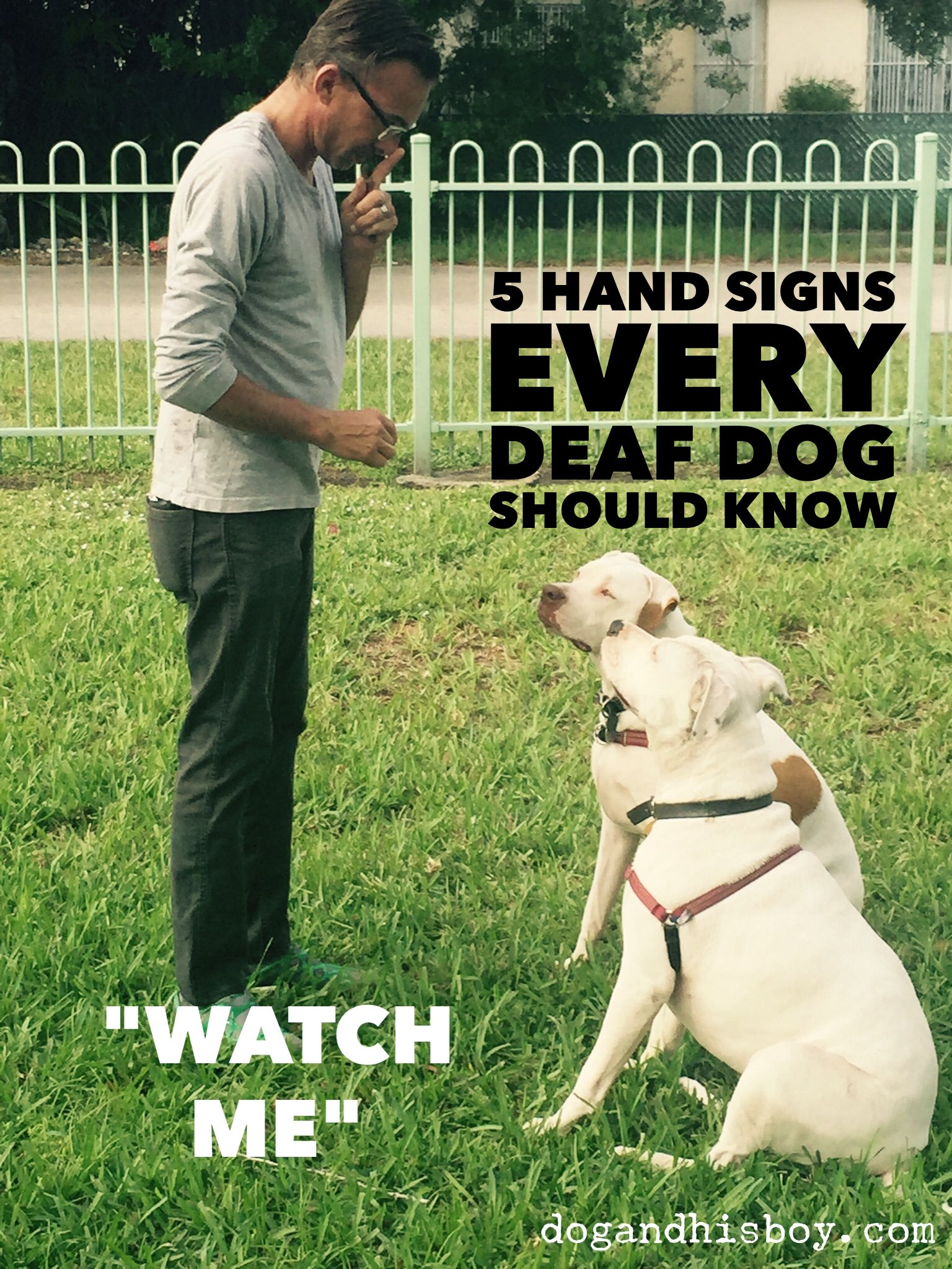 5 Hand Signs Every Deaf Dog Should Know Miya Pinterest Deaf