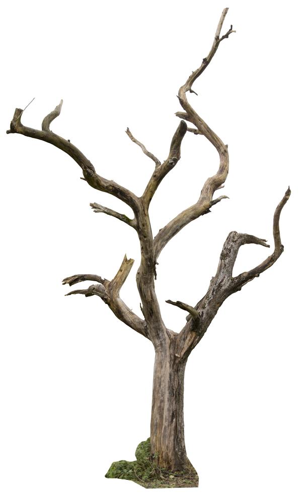 Dead Tree 04 By Gd08 Dry Tree Tree Textures Tree