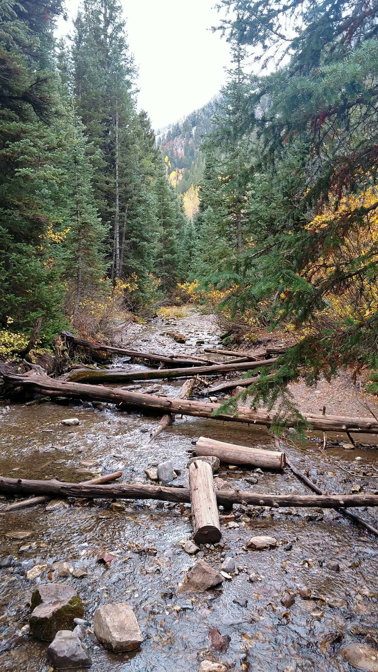 2160x3840 Oc Donut Falls Trail Just Outside Salt Lake City Utah Https Ift Tt 2ayprlf Salt Lake City Utah Lake Trail