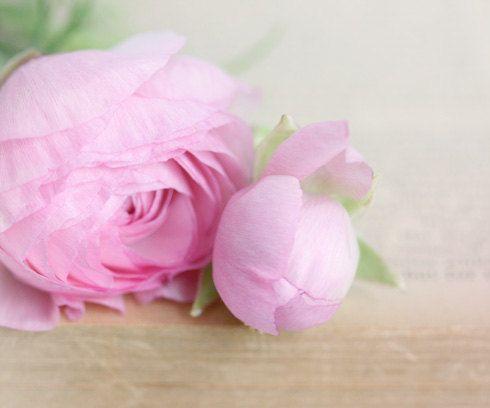 Pink Ranunculus květiny na staré knihy romantické vinobraní stránky knihy na jaře velikonoční den matek pro své zahradě 8x10 chata šik