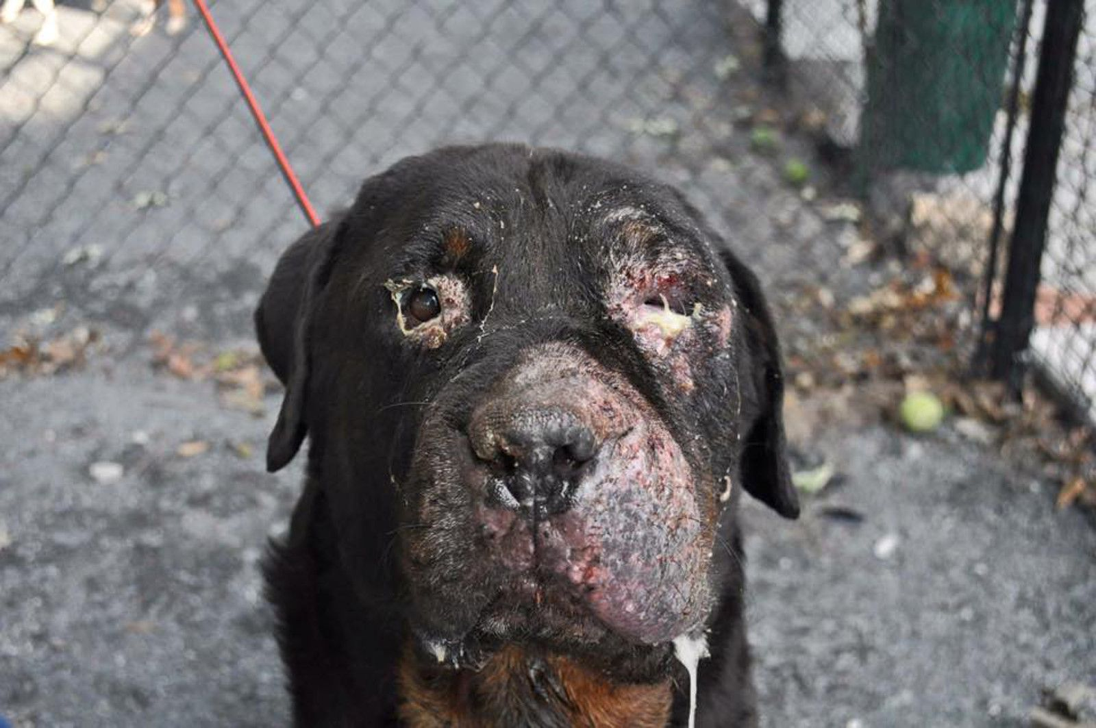 Abandoned Severely Injured And Ill Dog Is Rescued And Given A