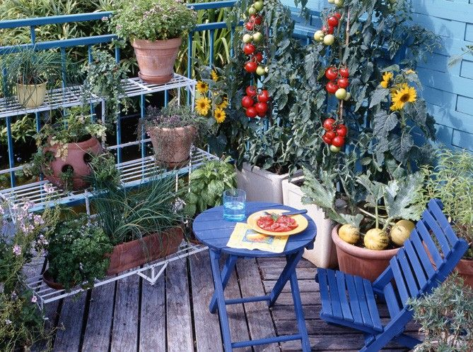 Un mini jardin sur mon balcon Maison \ Travaux outside Pinterest