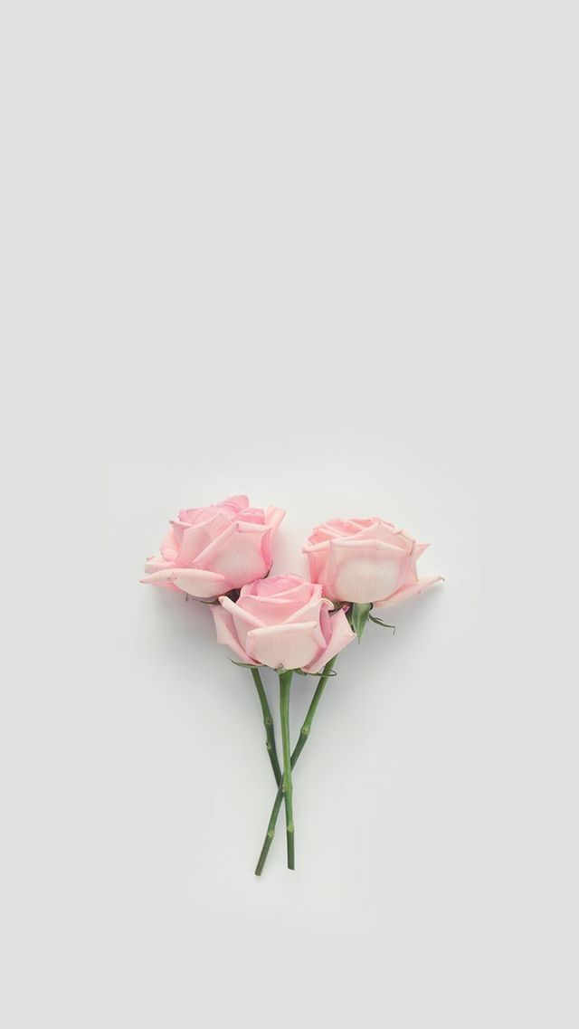 Pin By Meghan Camacho On Wallpapers Floral Wallpaper Rose Wallpaper Pink Wallpaper