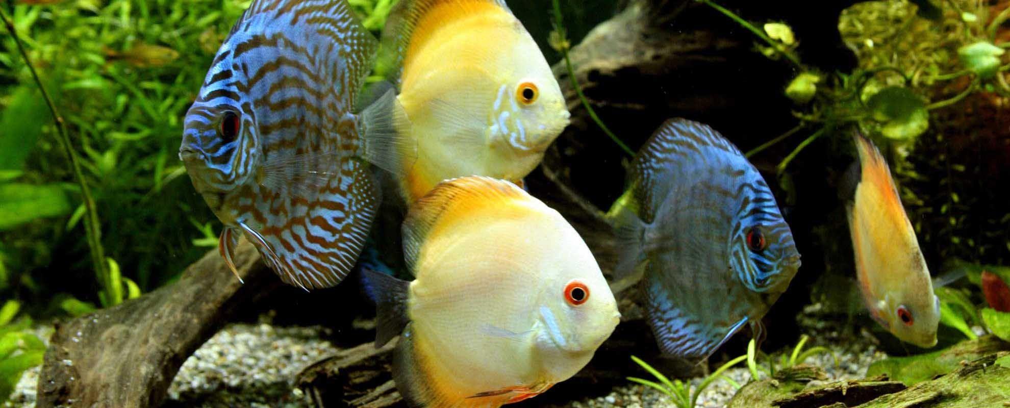 Можно ли заработать на разведении рыбок? http
