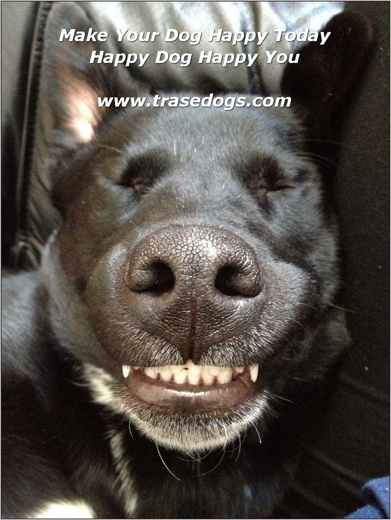 Learn About Dog Care With This Article Dog Care Dogs Black Lab Puppies