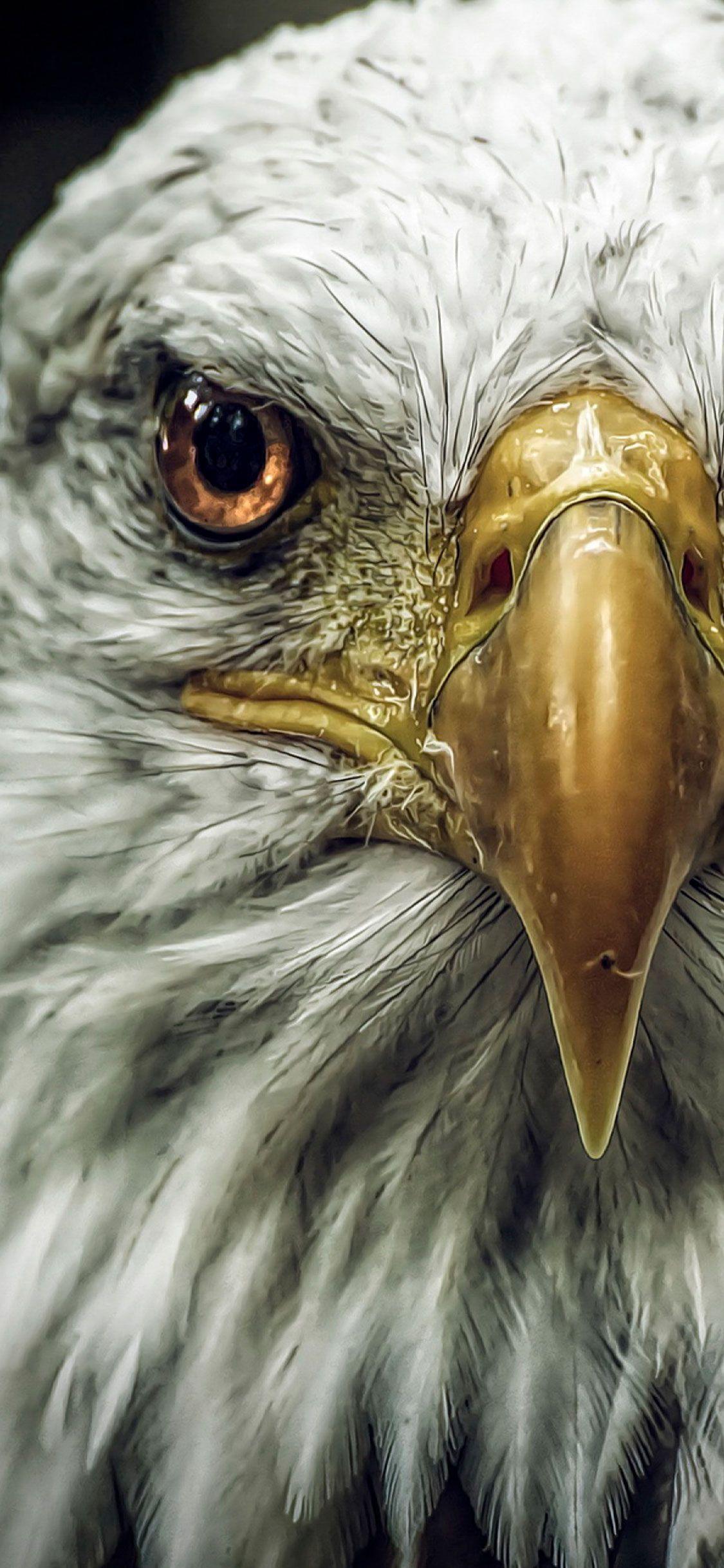 Eagle Wallpaper 4k Iphone Mywallpapers Site Eagle Wallpaper Eagle Pictures Pet Birds
