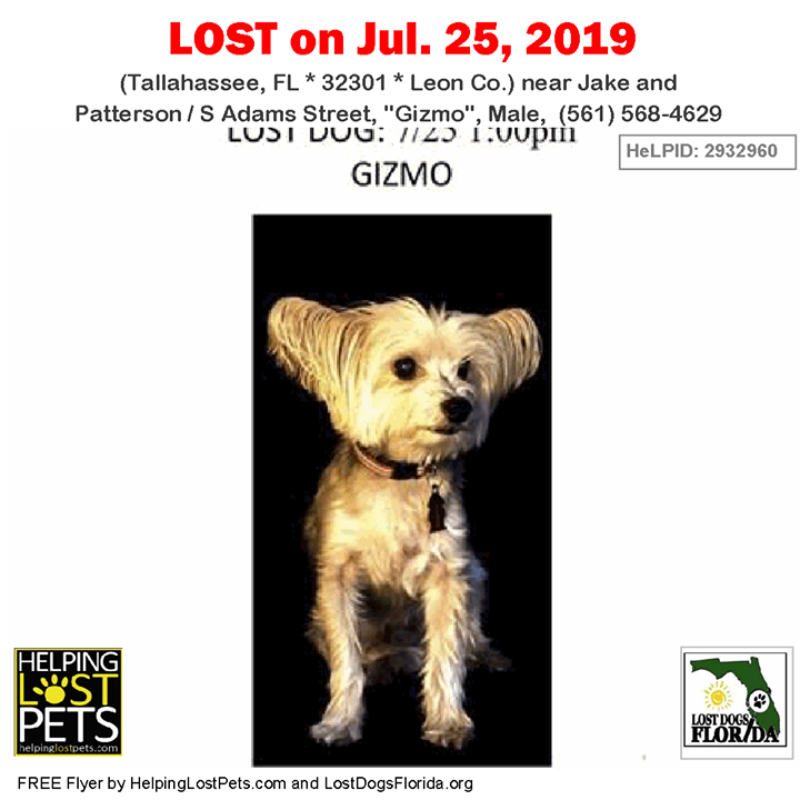 Lost Dog Have You Seen Gizmo Lostdog Gizmo Tallahassee Jake