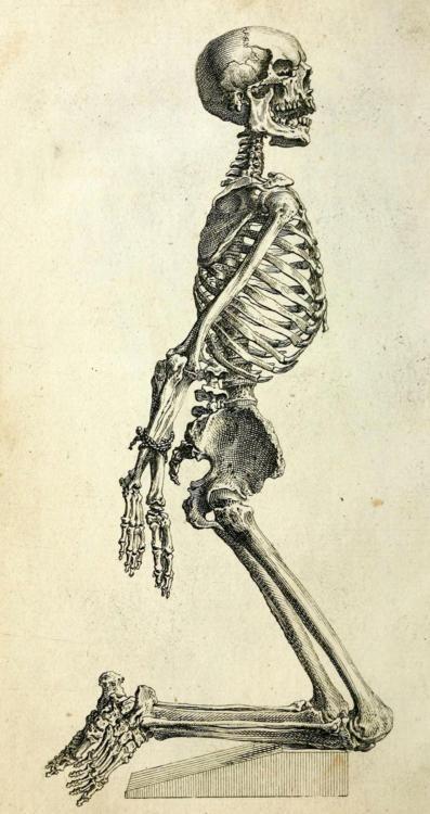 Pin von Larry Hughes auf Skulls & Skeletons   Pinterest