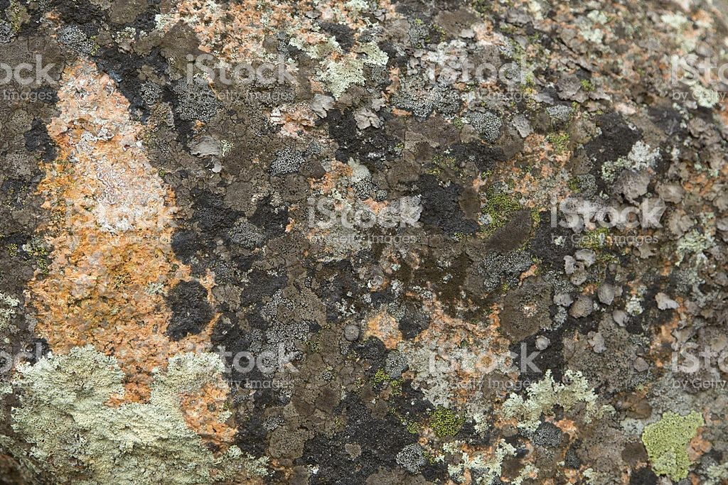 Maine Lichen Abstract royalty-free stock photo