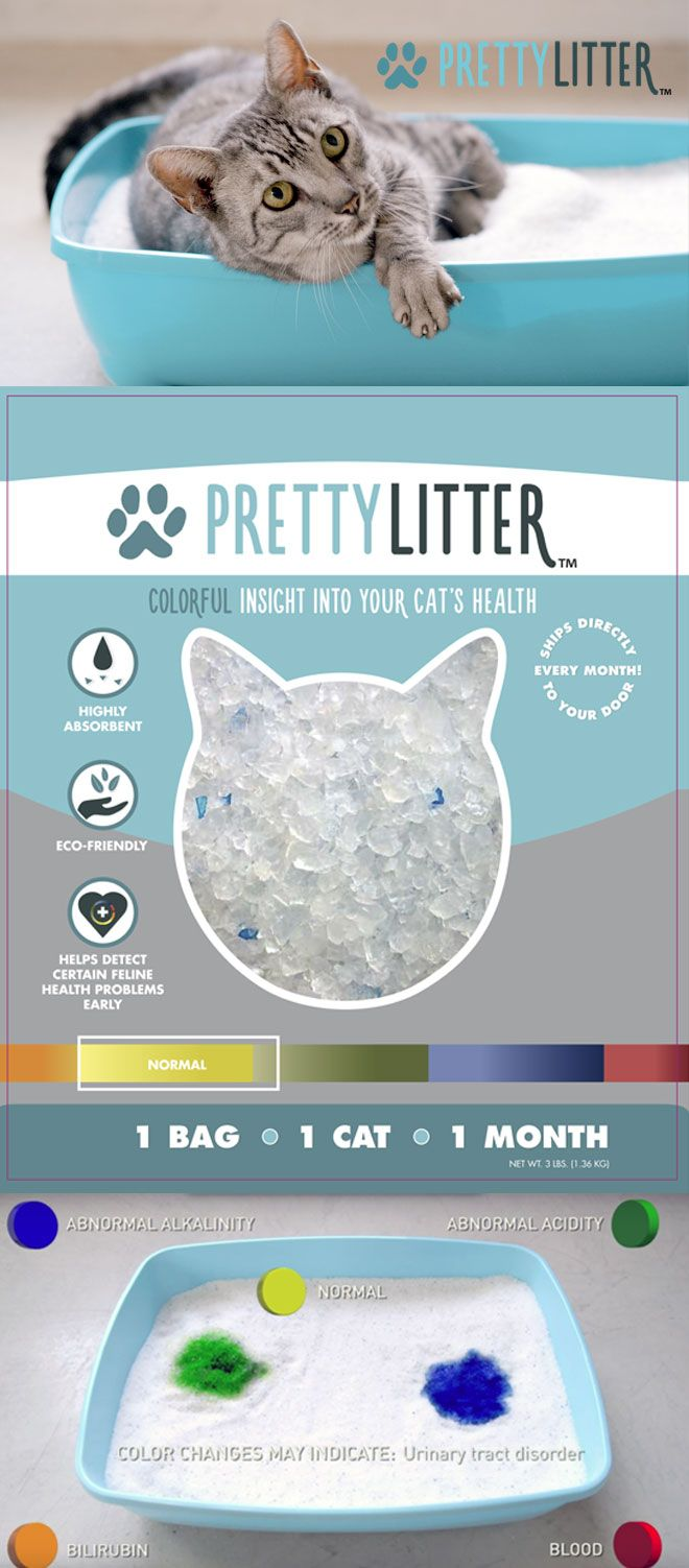 This New Innovative Kitty Litter Is A Game Changer For Cats