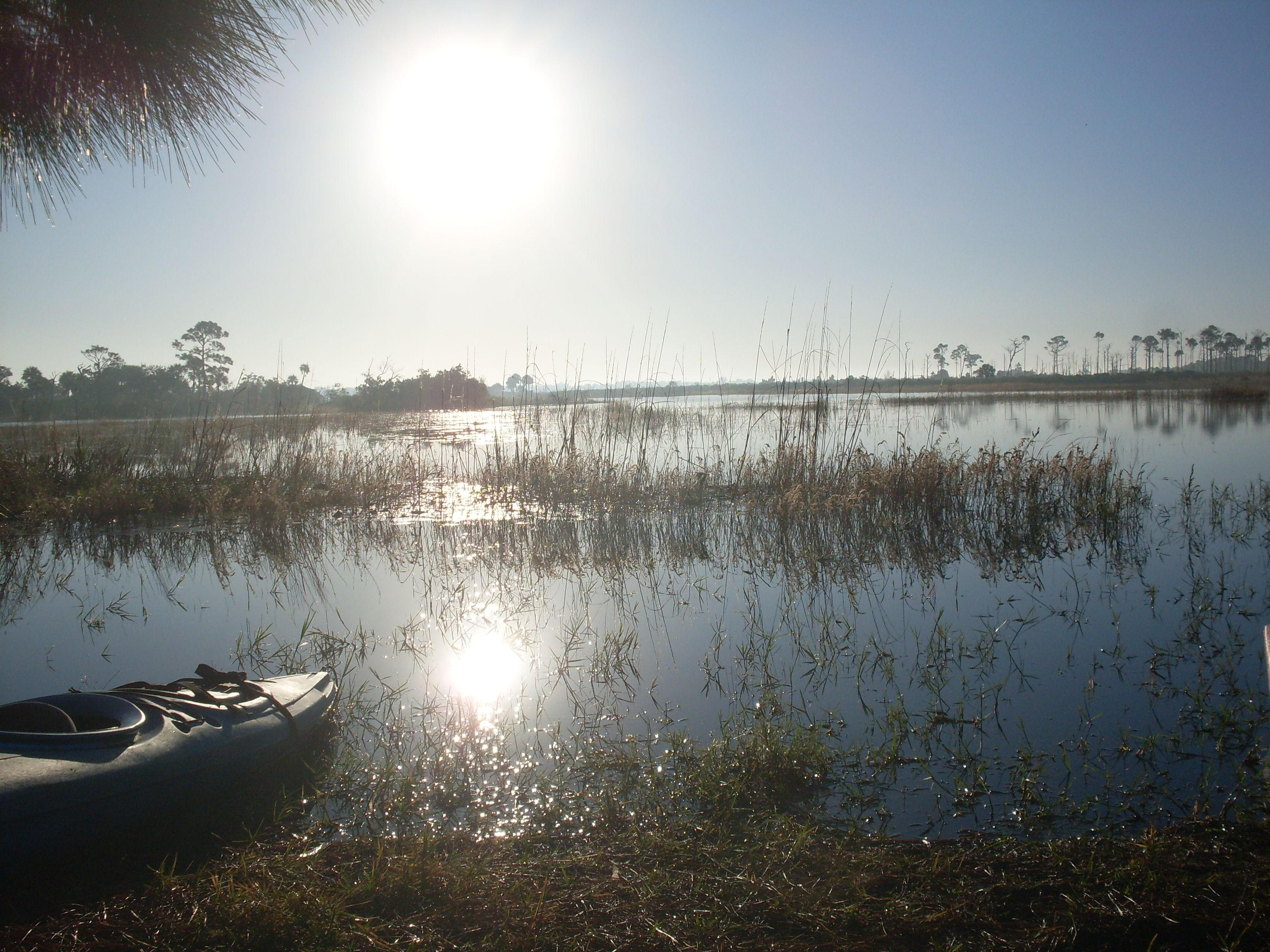 Fave place...Savannas Preserve Nature Park, Florida! Wish I was there now!