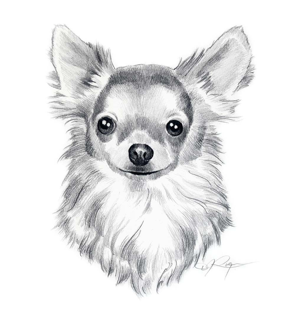 Long Coat Chihuahua Dog Pencil Drawing Art Print By Artist D J Etsy In 2020 Animal Drawings Dog Drawing Dog Pencil Drawing