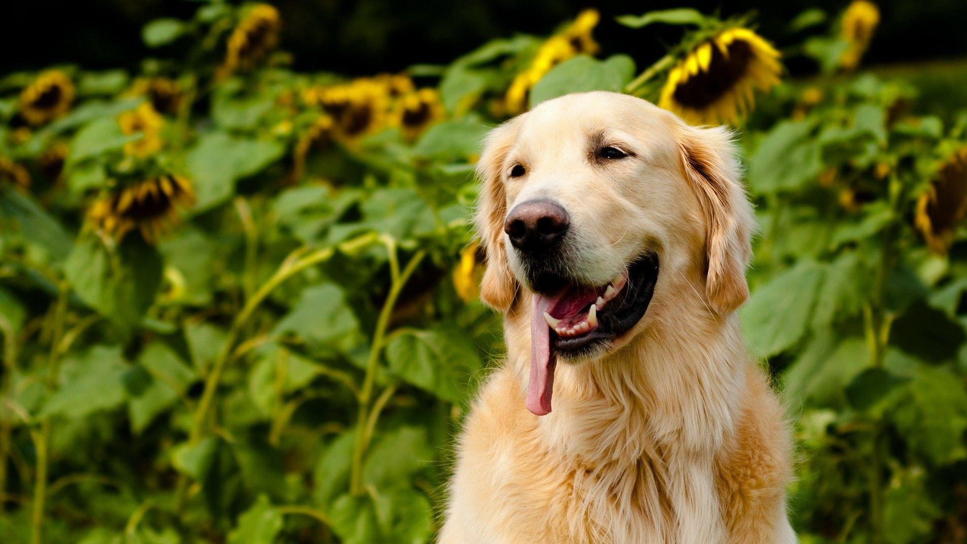 Картинки на рабочий стол красивые животные собаки