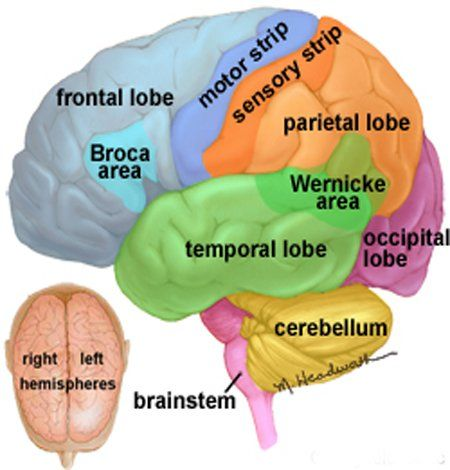 Psychology AQA Exam questions. Great for revision! | Brain ...
