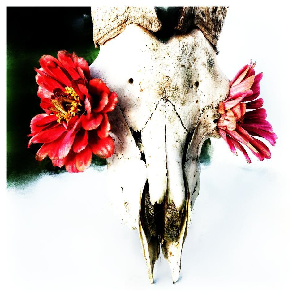 Image result for Georgia O'keeffe dry bones