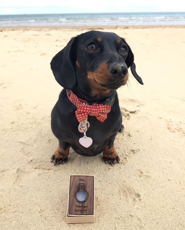 Dachshund At The Beach Vacation Sausage Dog At The Beach Dachshund
