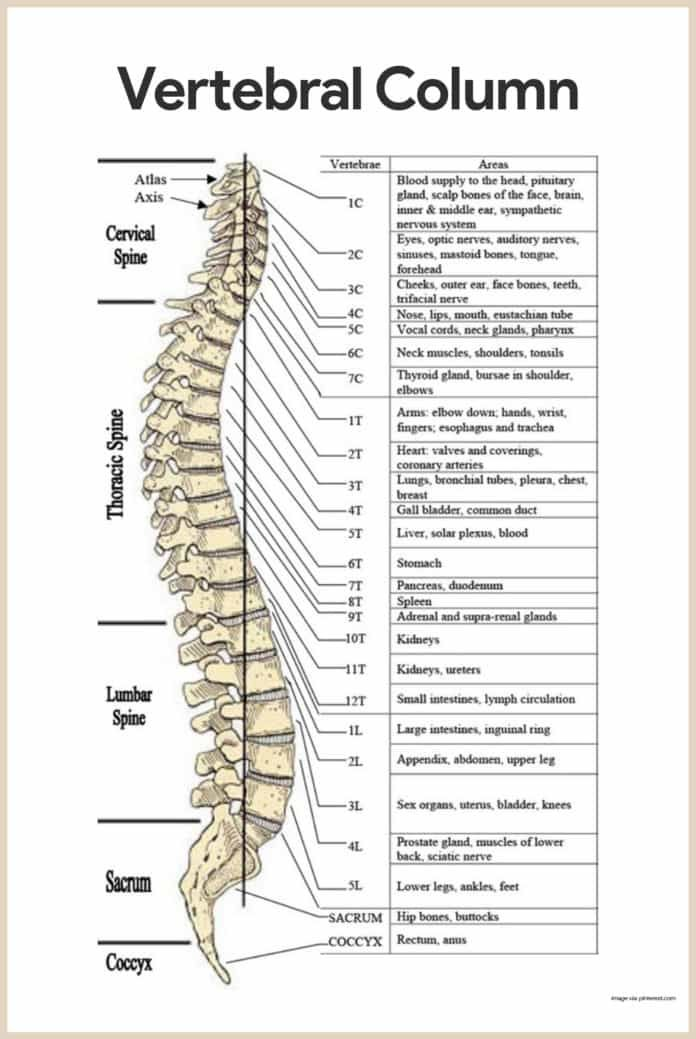 Skeletal System Anatomy And Physiology Medicine Pinterest