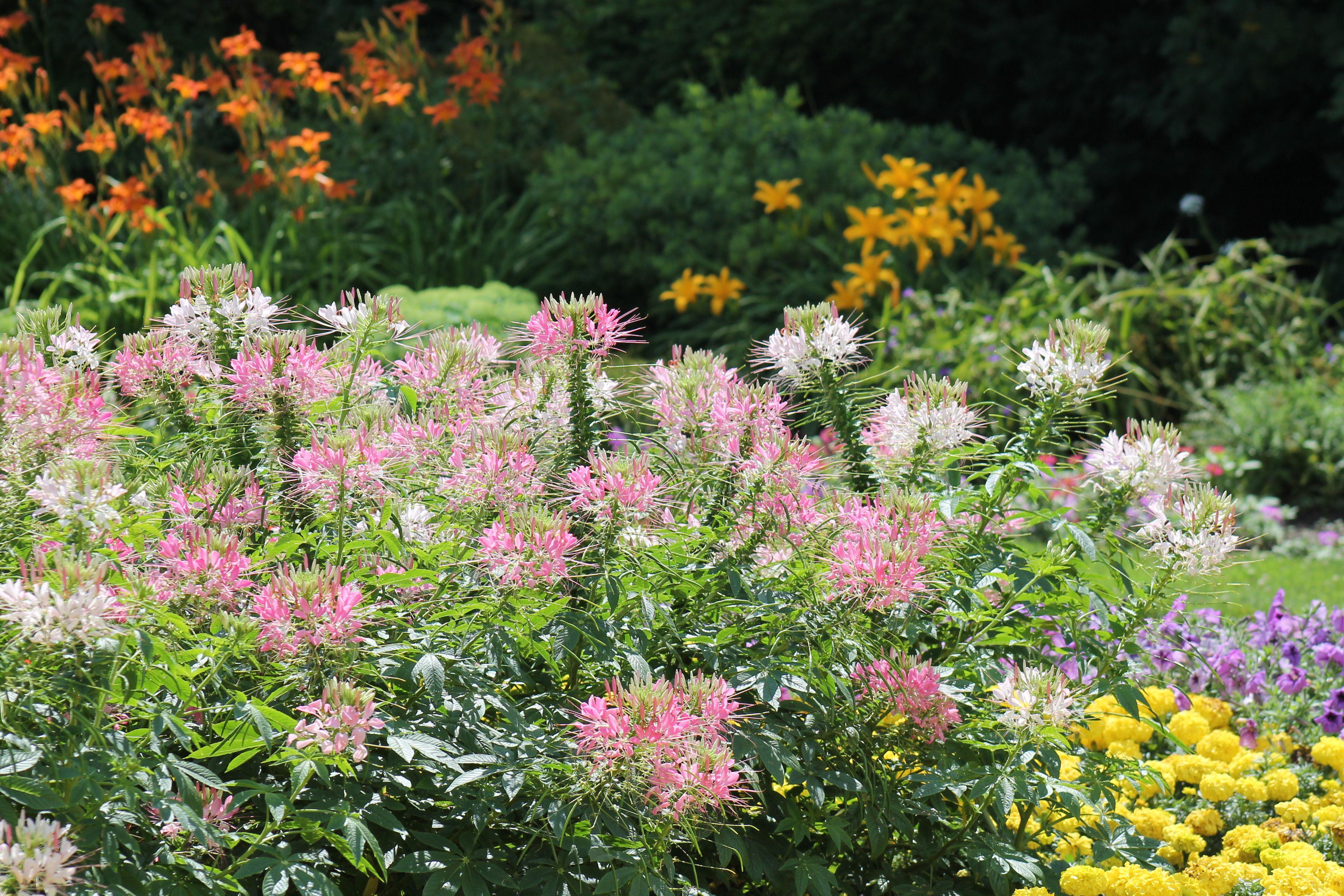 Why did the elder profess the garden