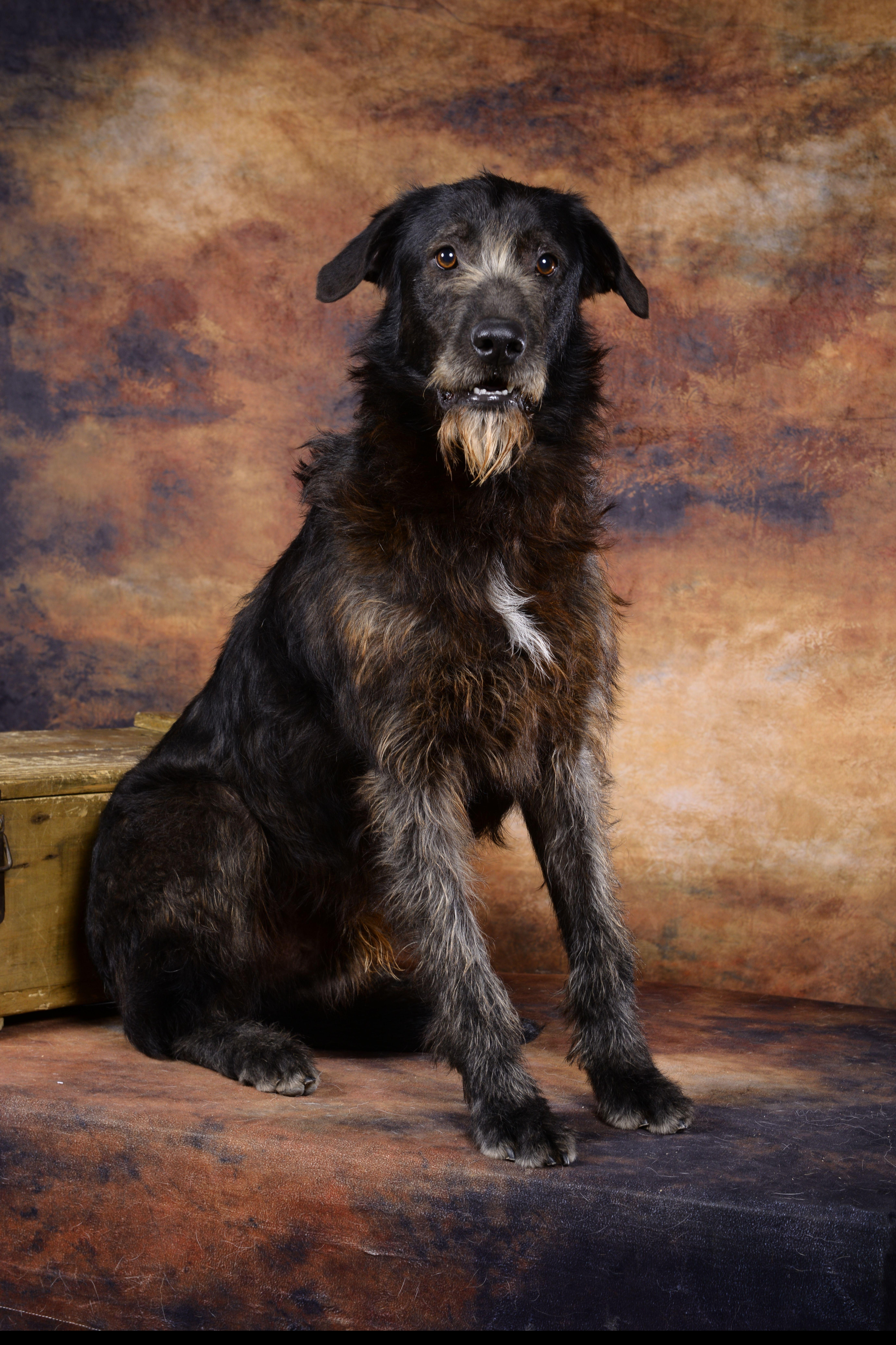 Epingle Par Refuge Canin Lotois Sur Adoptes 2020 Canin Chien Adopter Un Chien