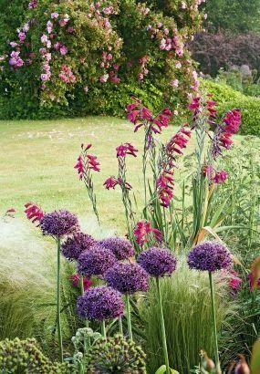 Créer un massif pour 3 fois rien avec des vivaces   Jardin ...