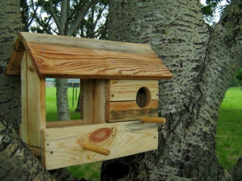 firenze casette per uccellini bricolage pinterest