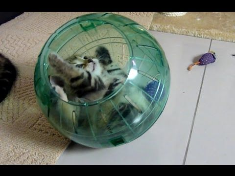 Funny Cats | Cute Kittens and spacecraft ( Kitten in Hamster Ball )