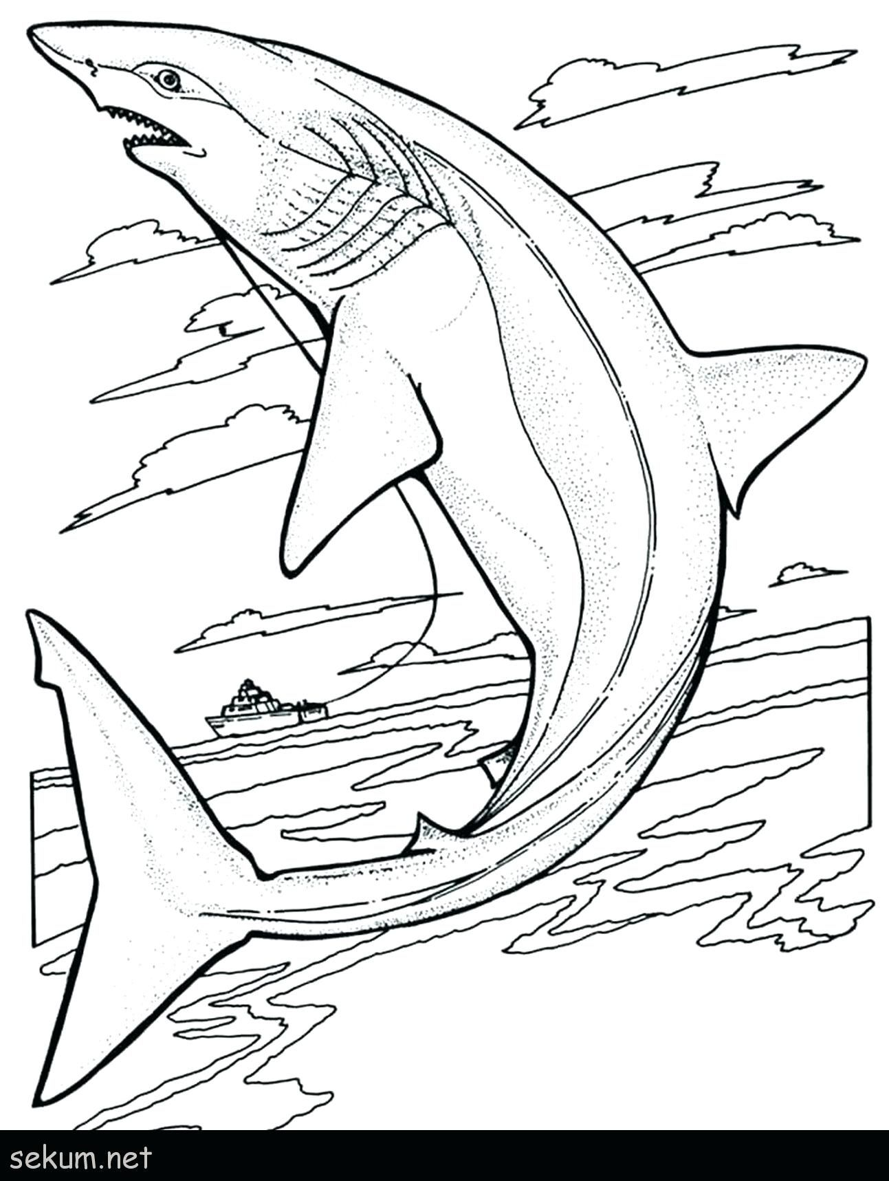 Whale Shark Coloring Page Printable Destiny Colouring