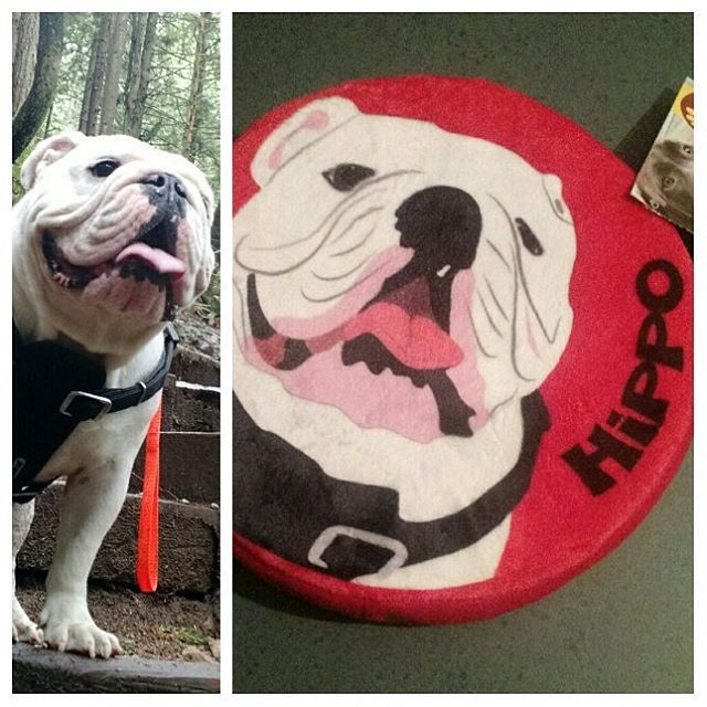 Custom Toy For Mr Potimus Blown Away By How Perfect It Turned Out Handdrawn Frisbee Pridebites Englishbu Custom Toys Dog Frisbee How To Draw Hands