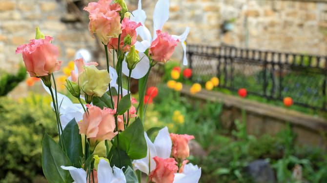 Ochráňte ruže pred najčastejšími chorobami.