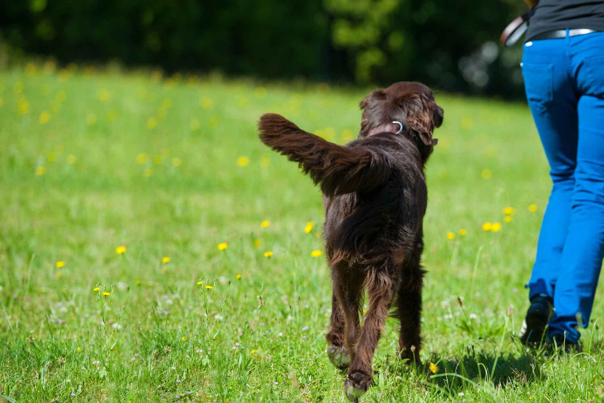 How To Train Your Dog To Walk Behind You Training Your Dog Dog