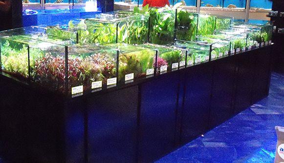 Tropical aquarium manufacturing plants station aquarium for Pet fish store