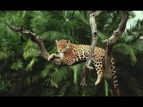 Amazon Rainforest Animals Discover The Animals In The Amazon