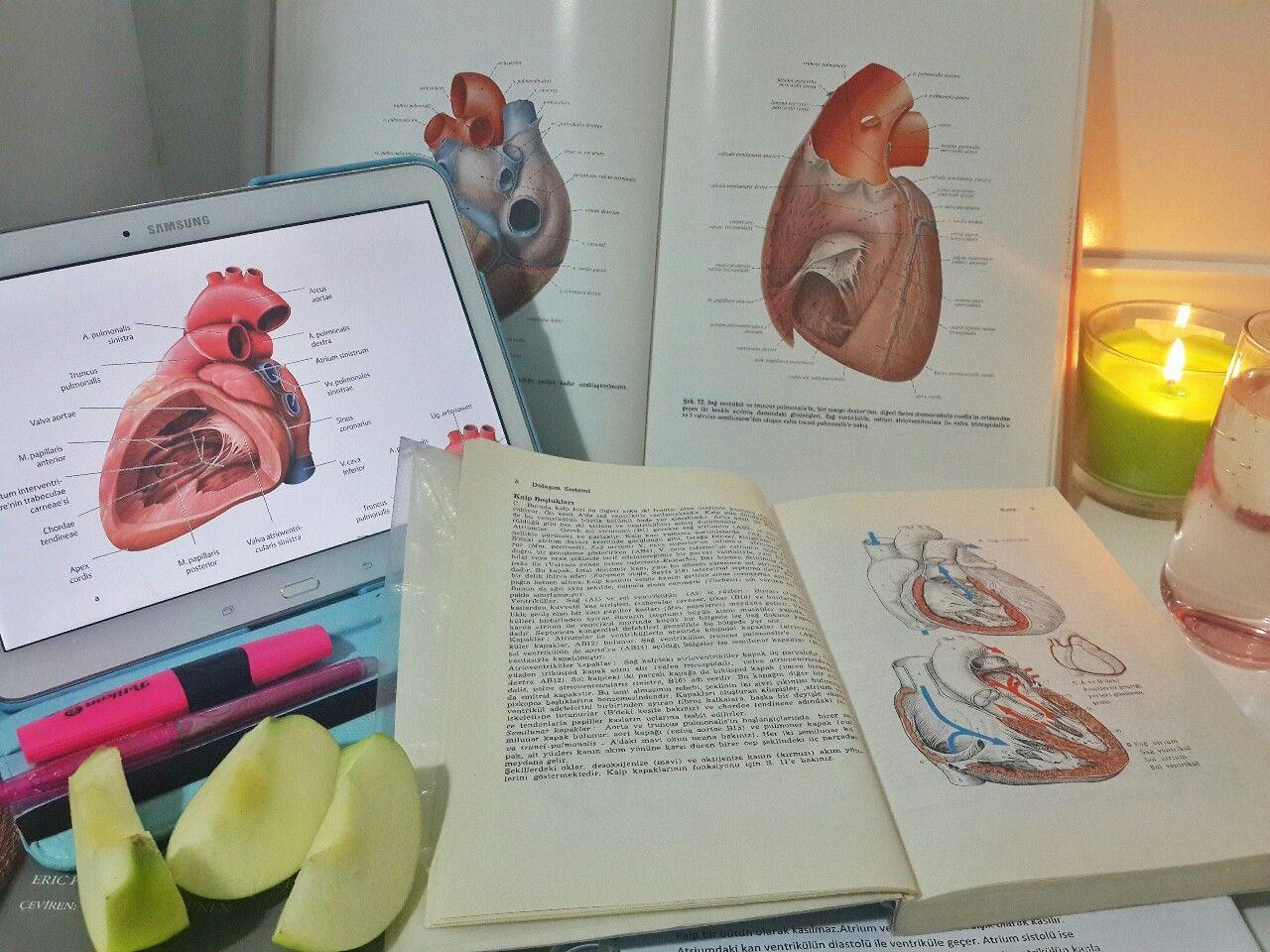 medness: Anatomy of the heart | Study motivation | Pinterest | Study ...
