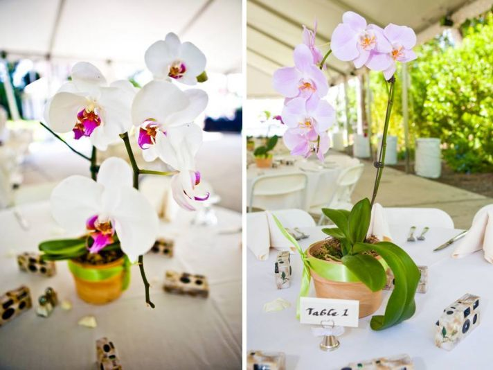 White Orchid Centerpieces Reception Table Decor Florida Wedding