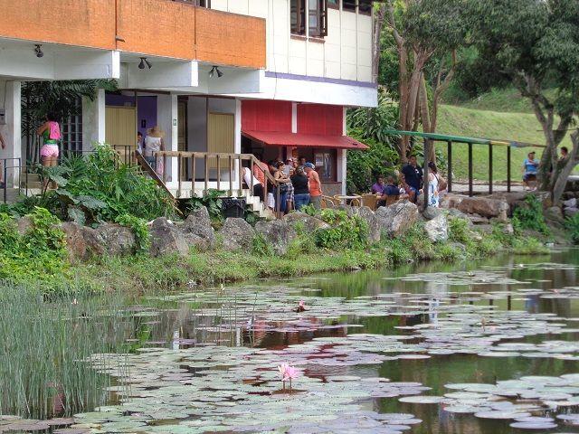 Las Terrazas Pinar Del Rio Cuba Cuba Terrazas Y Madre Tierra
