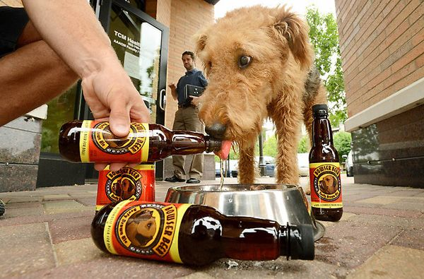 9 Ways to Celebrate #NationalDogDay (August 26th) from Dogster