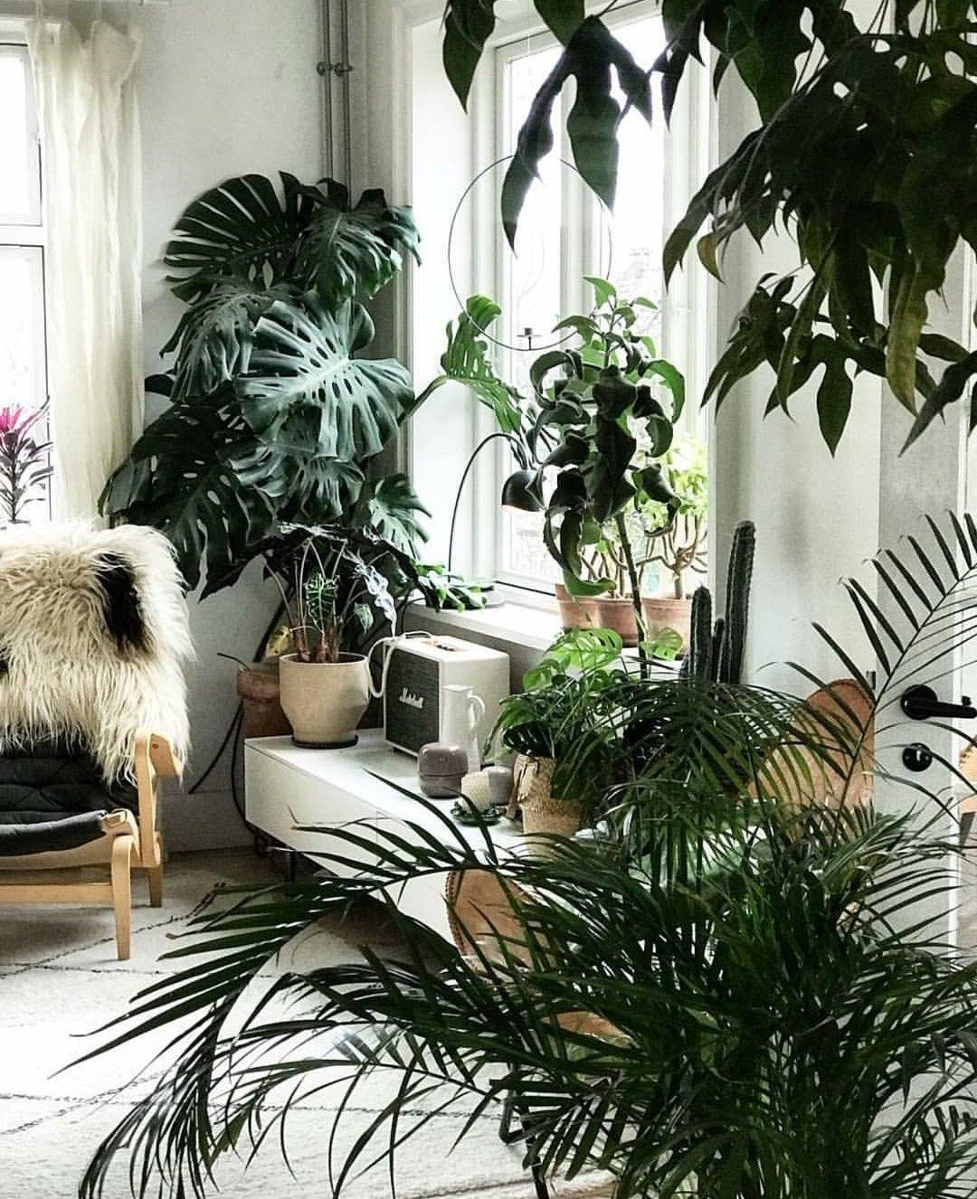 Pin von Sofiaaaaa36✨🌹 auf | p l a n t s | | Pinterest | Pflanzen ...